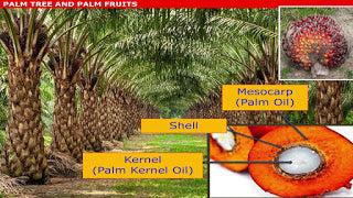 Ingredient Highlight- Palm Oil