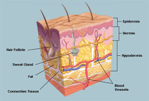 How our skin functions