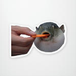 Pufferfish Eats Carrot