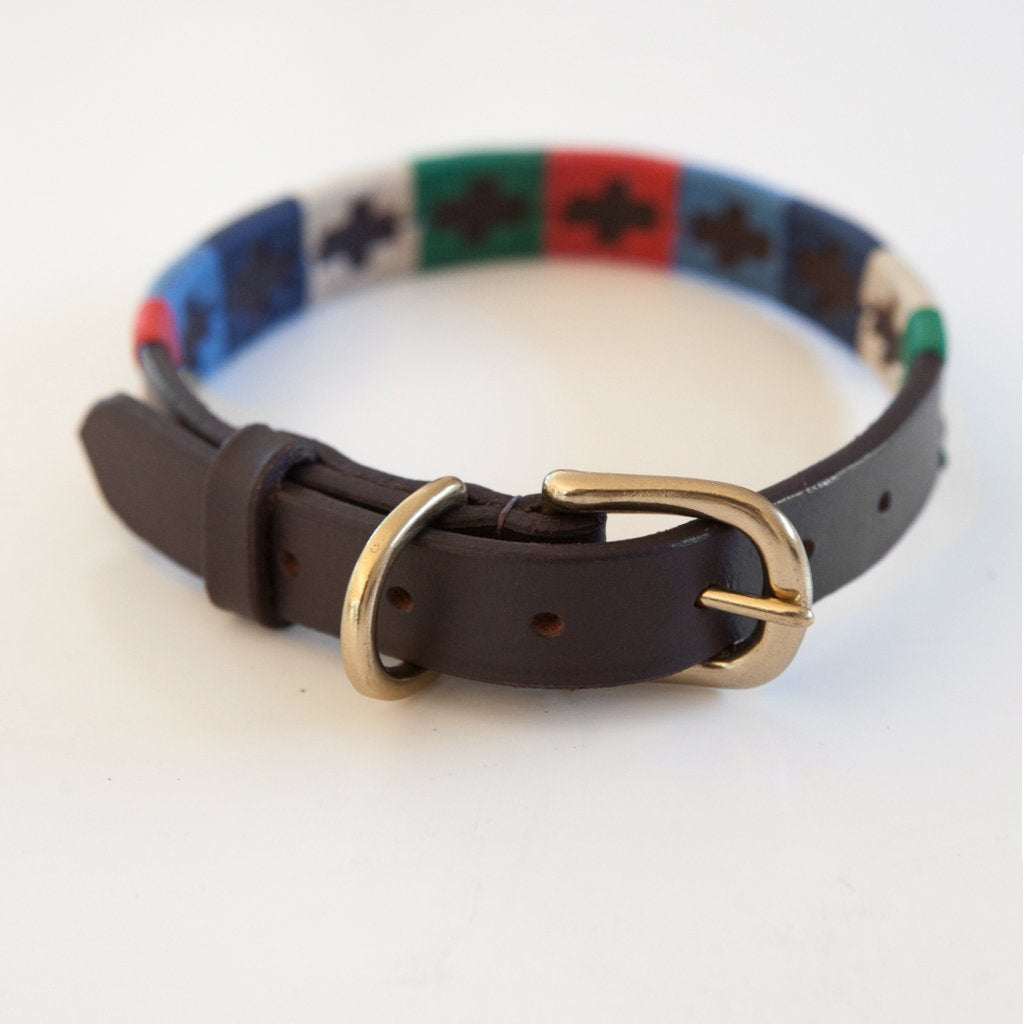 good dog collar leather brass buckle polo