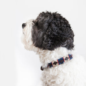 Good Dog Peanut Collar in brown leather blue red cream on medium dog