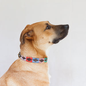 Good Dog Ruby Collar in brown leather pink blue red green cream on large dog