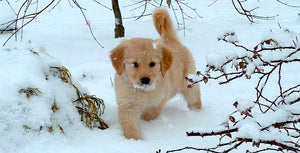 Cold Weather Tips for Pet Parents