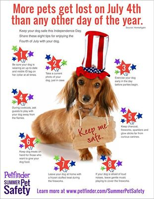 Keep your pets safe on the 4th of July