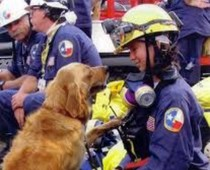 Rescue dogs of 9/11 to be honored Sunday by Cheryl Hanna, Pet Rescue Examiner