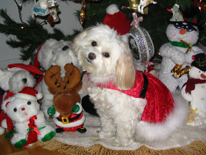 Angel's Happy Holiday Photo Contest - 4 winners will be announced!
