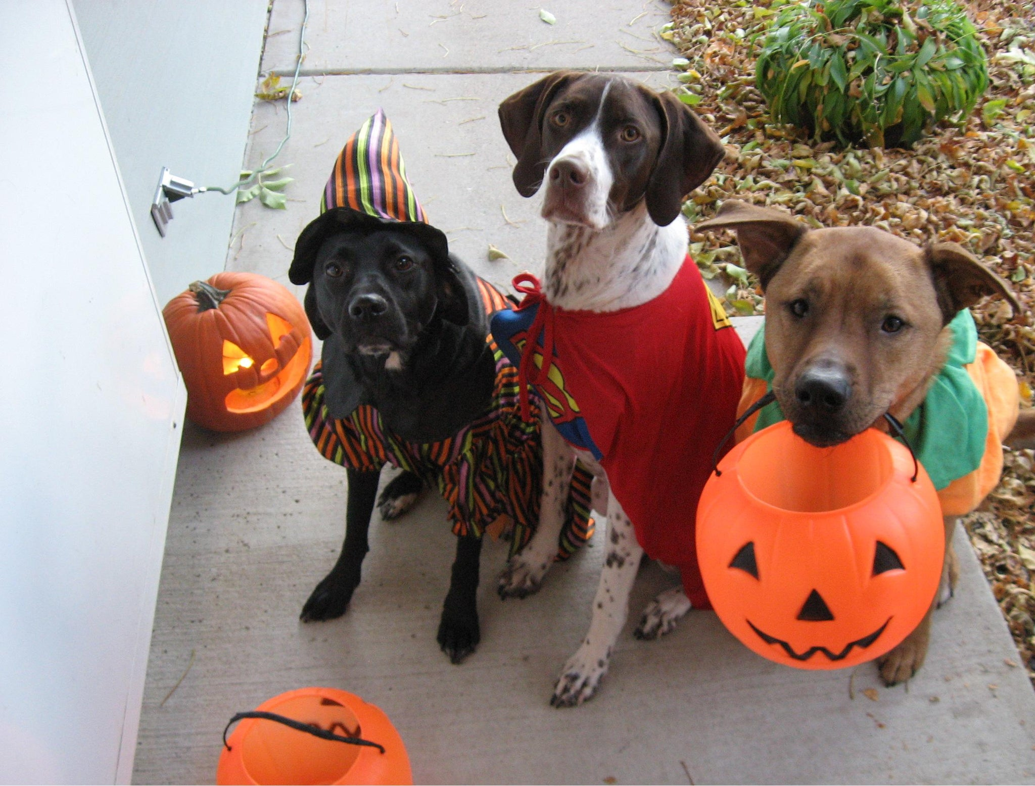 Halloween Safety Tips from the ASPCA