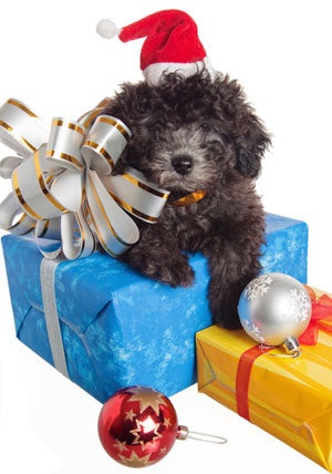 The Dog Whisperer, Cesar's Top 9 Holiday Tips for Dogs