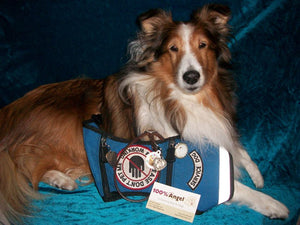 Holly, a Service Dog and Community Champion