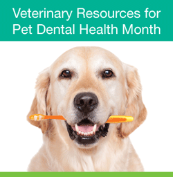 February is National Pet Dental Health Month