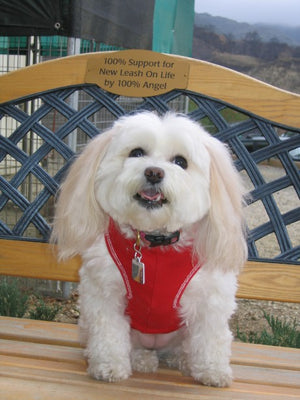 An Angel among us by Becky Starr Featured in the Los Angeles Pet Care Examiner