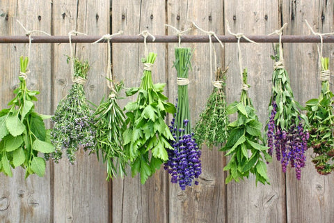 drying herbs in budles