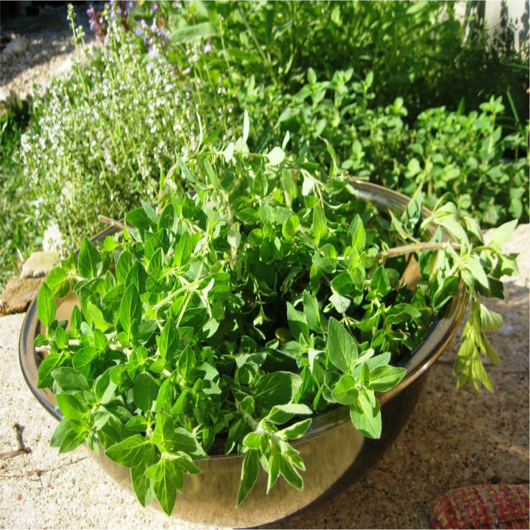 🌿OREGANO LEAVES  (Country Origin. Mexico)
