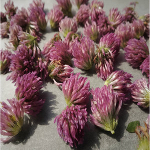 🌿RED CLOVER FLOWERS (Country Origin. Albania)