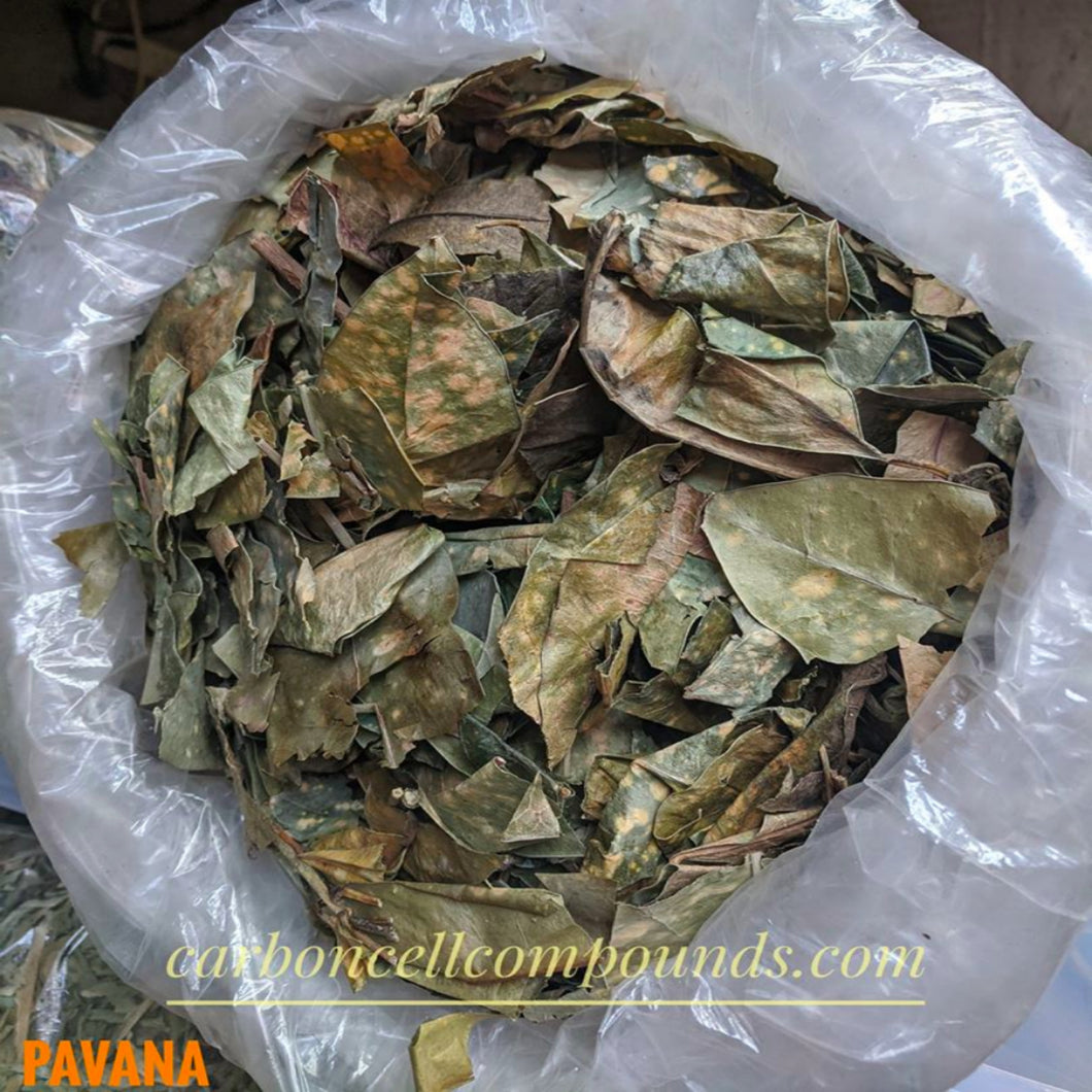 🌿PAVANA PLANT LEAVES (Country Origin. Jamaica) Next Wild-Picking Availability - 20 Oct 2020