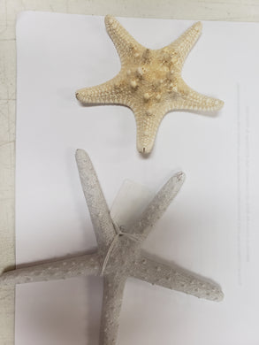 Starfish - White