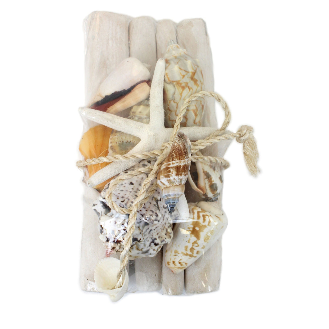 Shells & Starfish on Driftwood
