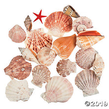 Load image into Gallery viewer, Scallop Basket Sea Shell Assortment