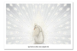 "Postcard ""Every bird is proud of its feathers"" (White peacock)"