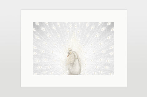"Print ""Every bird is proud of its feathers"" (White peacock)"