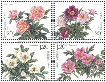 2019-09 Chinese Herbaceous Peony