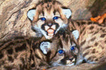 Load image into Gallery viewer, Cougar Cubs DIY Diamond Painting Kit