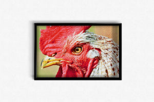 Ferocious Rooster DIY Diamond Painting Kit