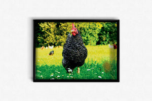 Homemade Chicken DIY Diamond Painting Kit