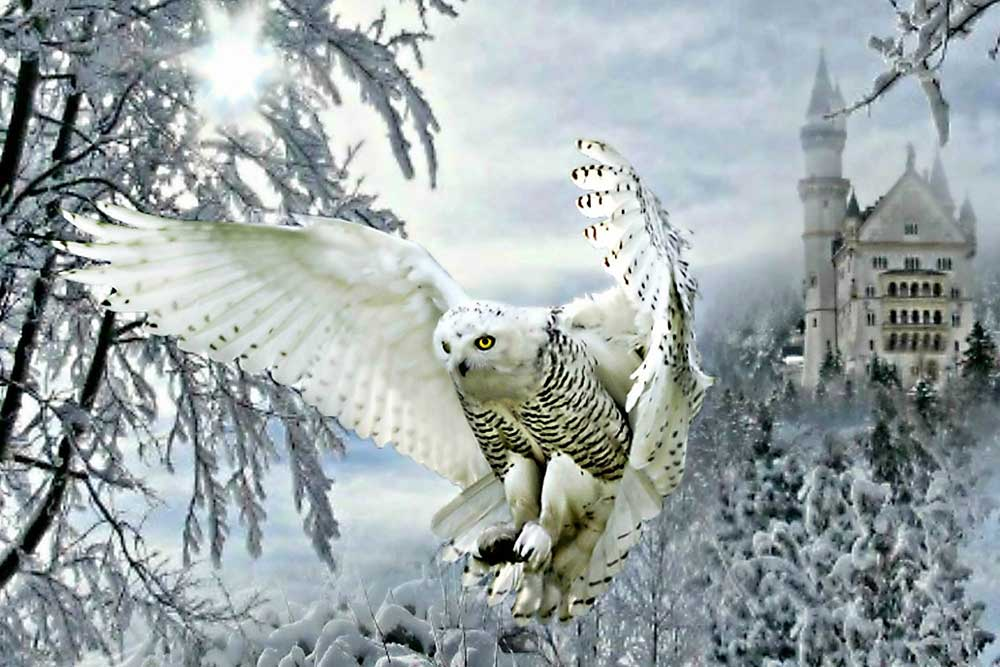 Owl from the Snow Castle DIY Diamond Painting Kit