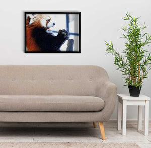 Red Panda at the Zoo DIY Diamond Painting Kit