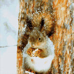 Load image into Gallery viewer, Squirrel In Winter DIY Diamond Painting Kit