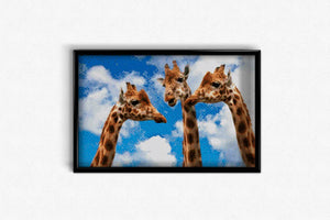 Three Giraffes DIY Diamond Painting Kit