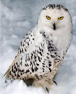 Load image into Gallery viewer, Arctic Owl DIY Diamond Painting Kit
