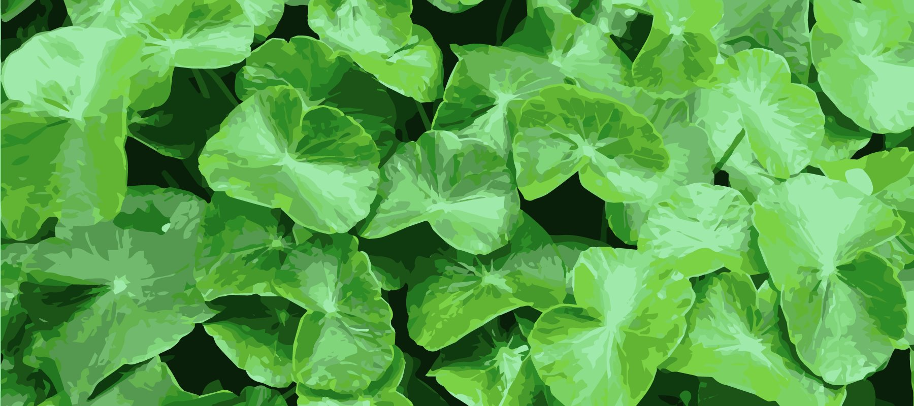 Skinspace - Active Ingredients - Centella Asiatica