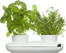 Herb Pot, Duo