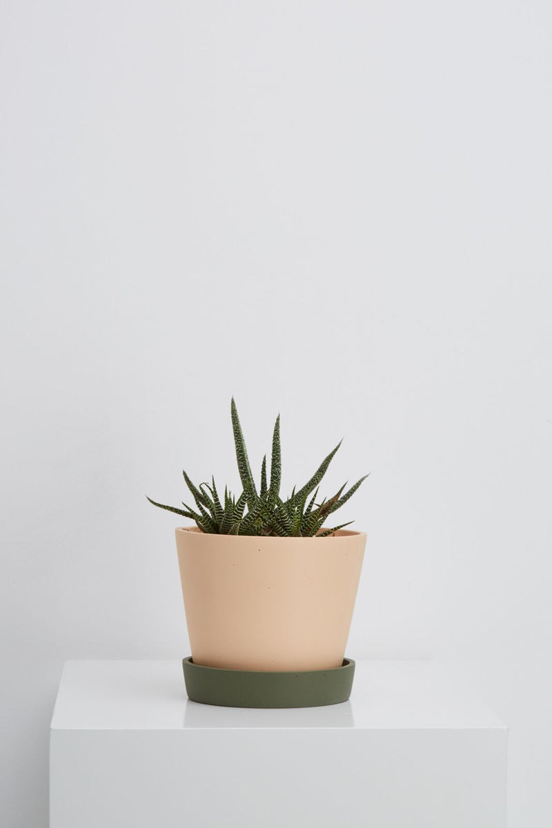 Capra Designs - Large Louise Planter - Salt and Agave
