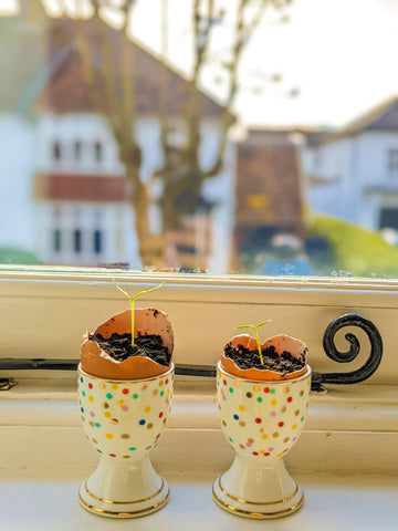 Egg-Plants Eco Hints and Tips