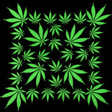 Marijuana Weed Leaf Bandana - 420 Mile High
