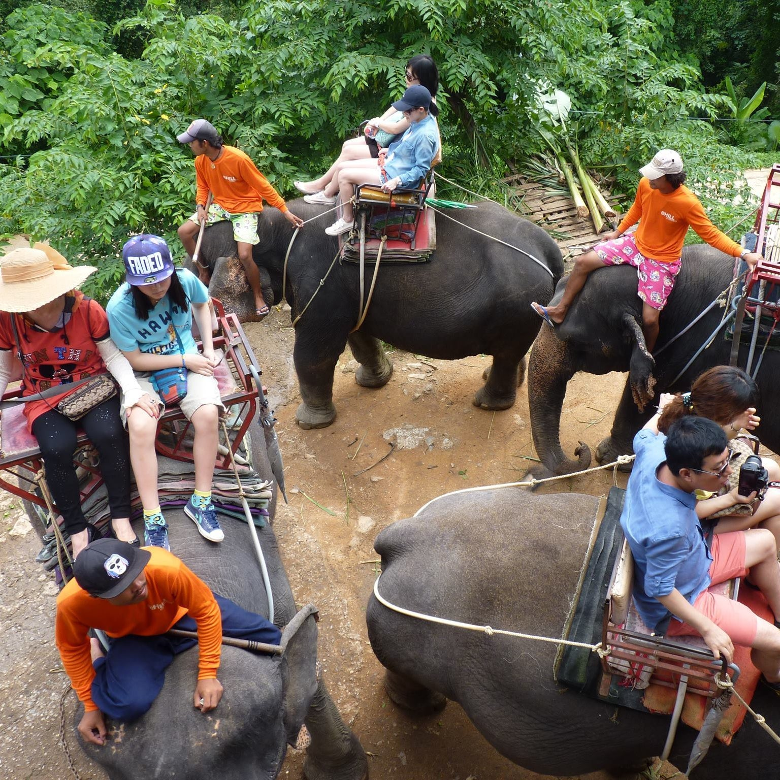 Wild and Grey Riding Elephants Thailand