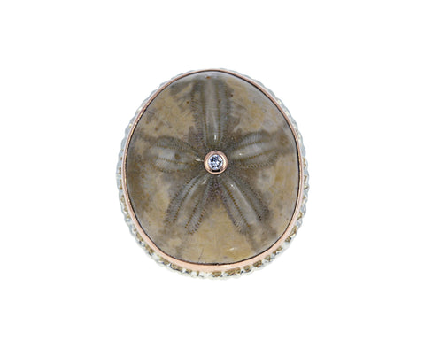 Fossilized Sand Dollar and Diamond Ring - TWISTonline
