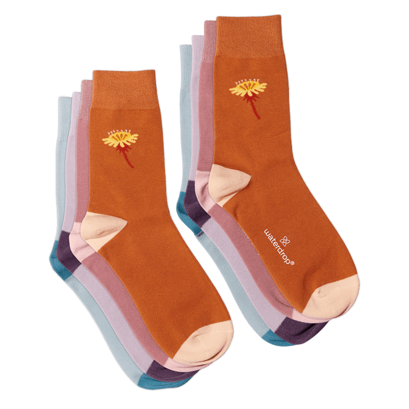 Season Socks Set