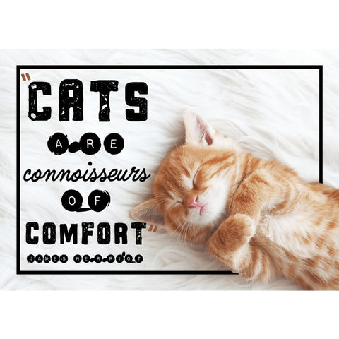 Image of Cats are connoisseurs of comfort - Cute Kitten - Professional Photo Print - 5x7 inch