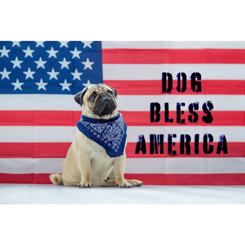 Dog Bless America Cute Pug USA Flag - Professional Photo Print - 6x9 inch
