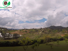 Load image into Gallery viewer, Colombian green coffee plantation