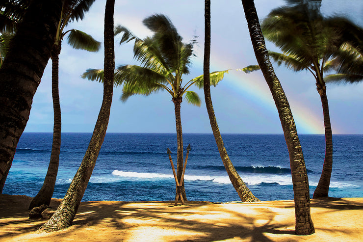 Rainbow Palms at Mamas - Paia