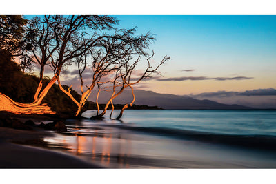 Rooted in Olowalu