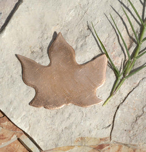 Maple Leaf for Enameling Stamping Texturing Blanks- Variety of Metals