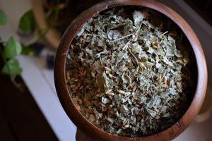 CALEA ZACATECHICHI | THE DREAM HERB | WILD-HARVESTED