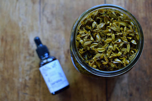 CHAPARRAL TINCTURE | CREOSOTE BUSH, CHAPARRAL, LARREA TRIDENTATA | WILDHARVESTED | HERBAL EXTRACT