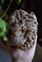 Load image into Gallery viewer, JERICHO FLOWER | ROSE OF JERICHO | THE RESURRECTION FLOWER | REBIRTH | AWAKENING | PLANT MAGICK